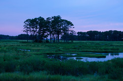 Dusk in the Marshlands