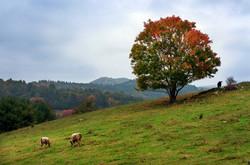 Autumn & A Farm