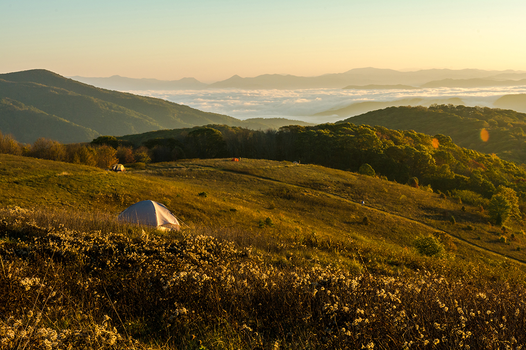 Camping Along Max Patch