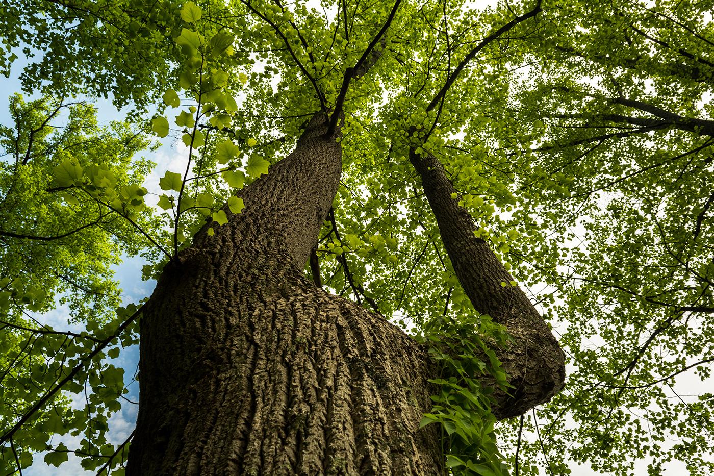 Split Tree View
