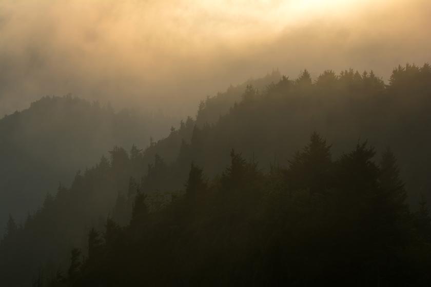 Golden Light Over the Smoky's