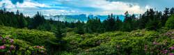 Spring at Roan Mountain