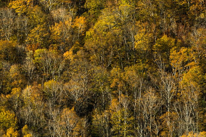 Autumn Along the Mountain Side