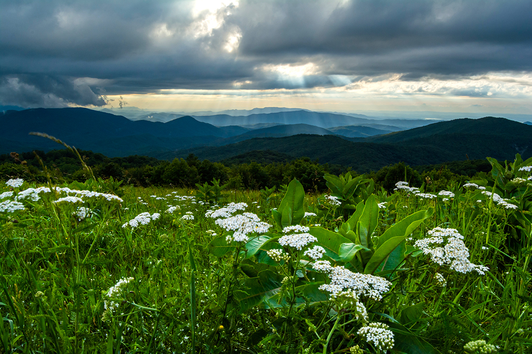 Late Evening on Max Patch