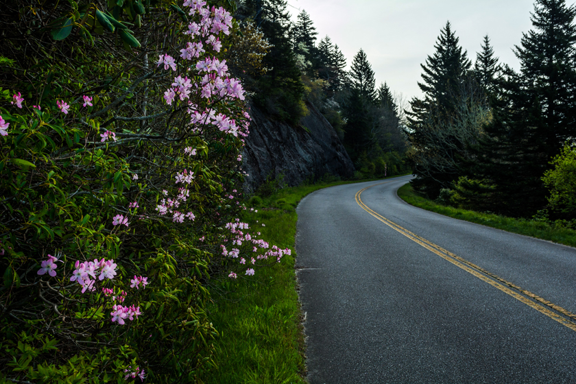 Azalea Blooms and the Parkway