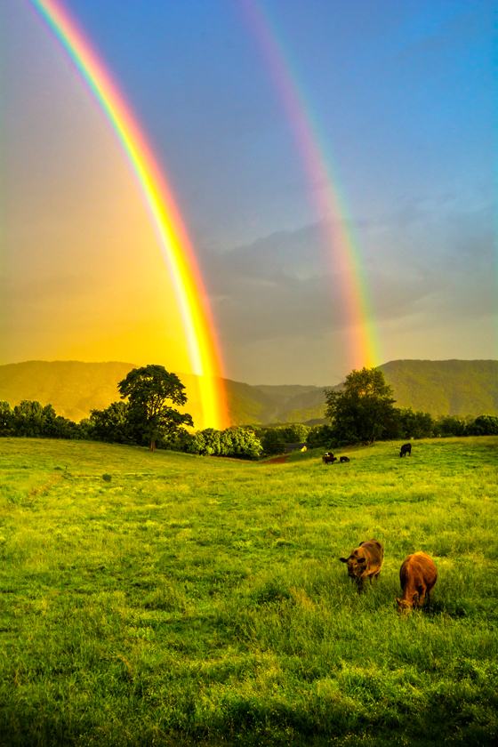 Rainbows and Cows