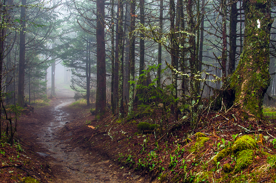 Fog on the Appalachian Trail