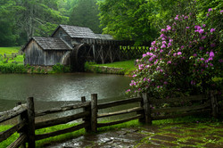 Mabry Mill and Rhododendron Blooms