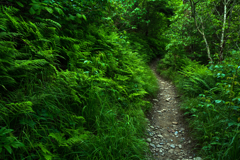 Appalachian Trail, GSMNP