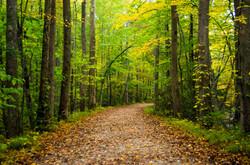 Autumn at Elkmont