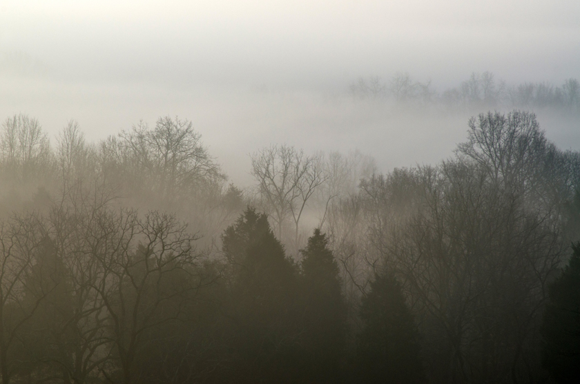 Foggy Forest View