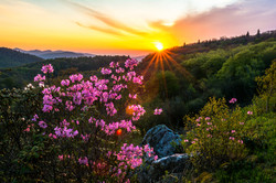 Spring Sunrise Along the Parkway