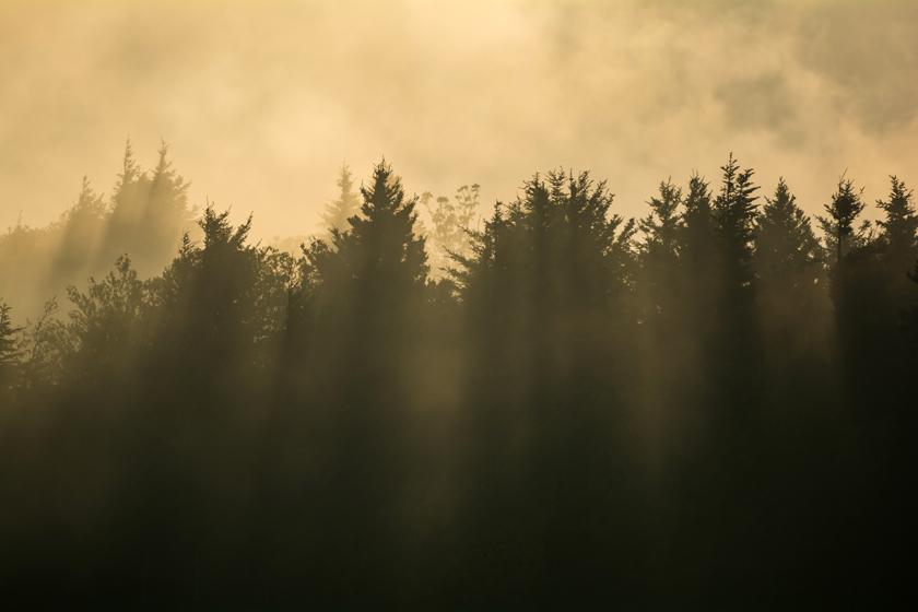Golden Hour Breaks Through the Forest