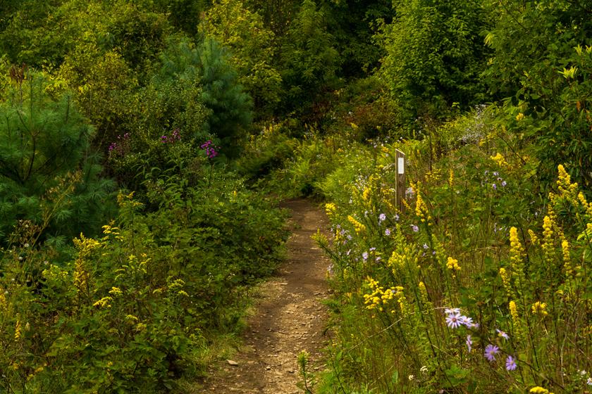 Autumn Flowers Along Max Patch