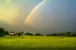 Rainbows Over the Farm
