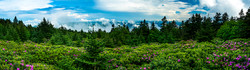 Rhododendron Garden, Roan Mountain