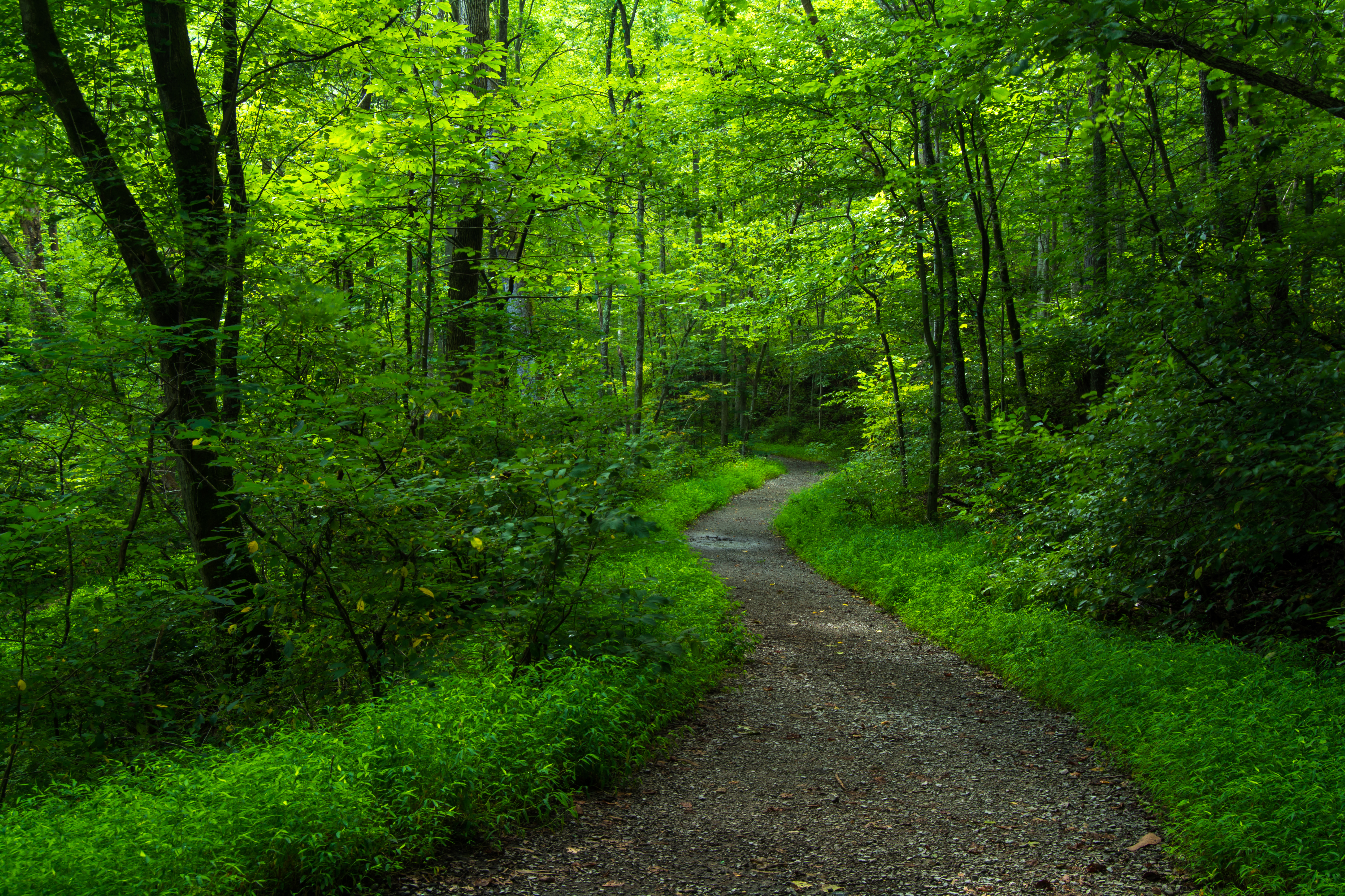 Tennessee Trail