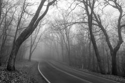 Fog Along Skyline Drive