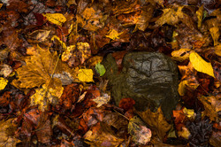 Autumns Death