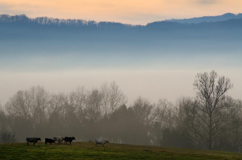 Fog Along the Farm