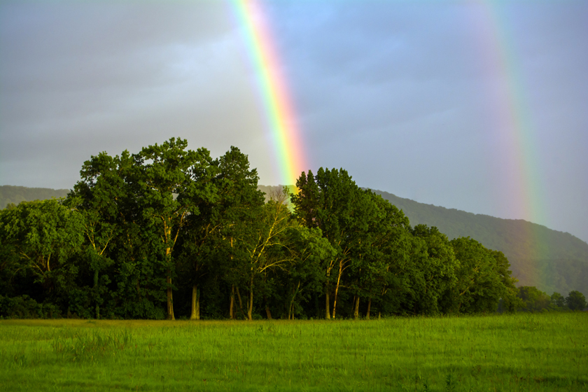 Rainbows Over the Forest