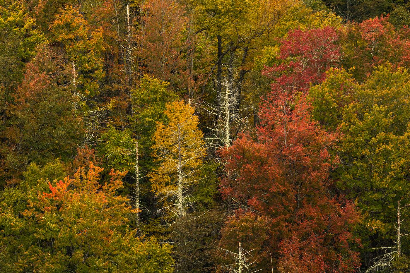 Autumn Glimpse