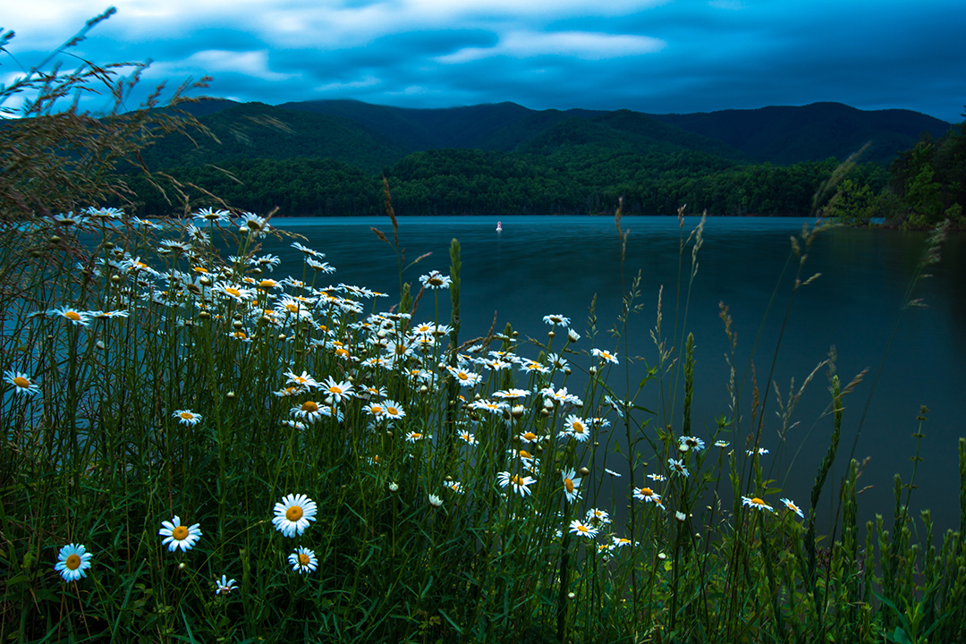 Spring Flowers at Watauga Lake