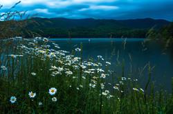 Spring Flowers at Watauga Lake