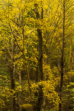 Autumns Coat