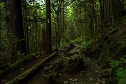 Appalachian Trail to Newfound Gap
