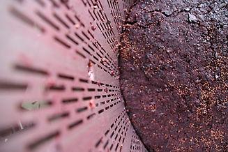 מסחטת סל עם ענבים אדומים