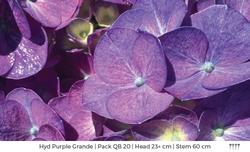 Purple 03