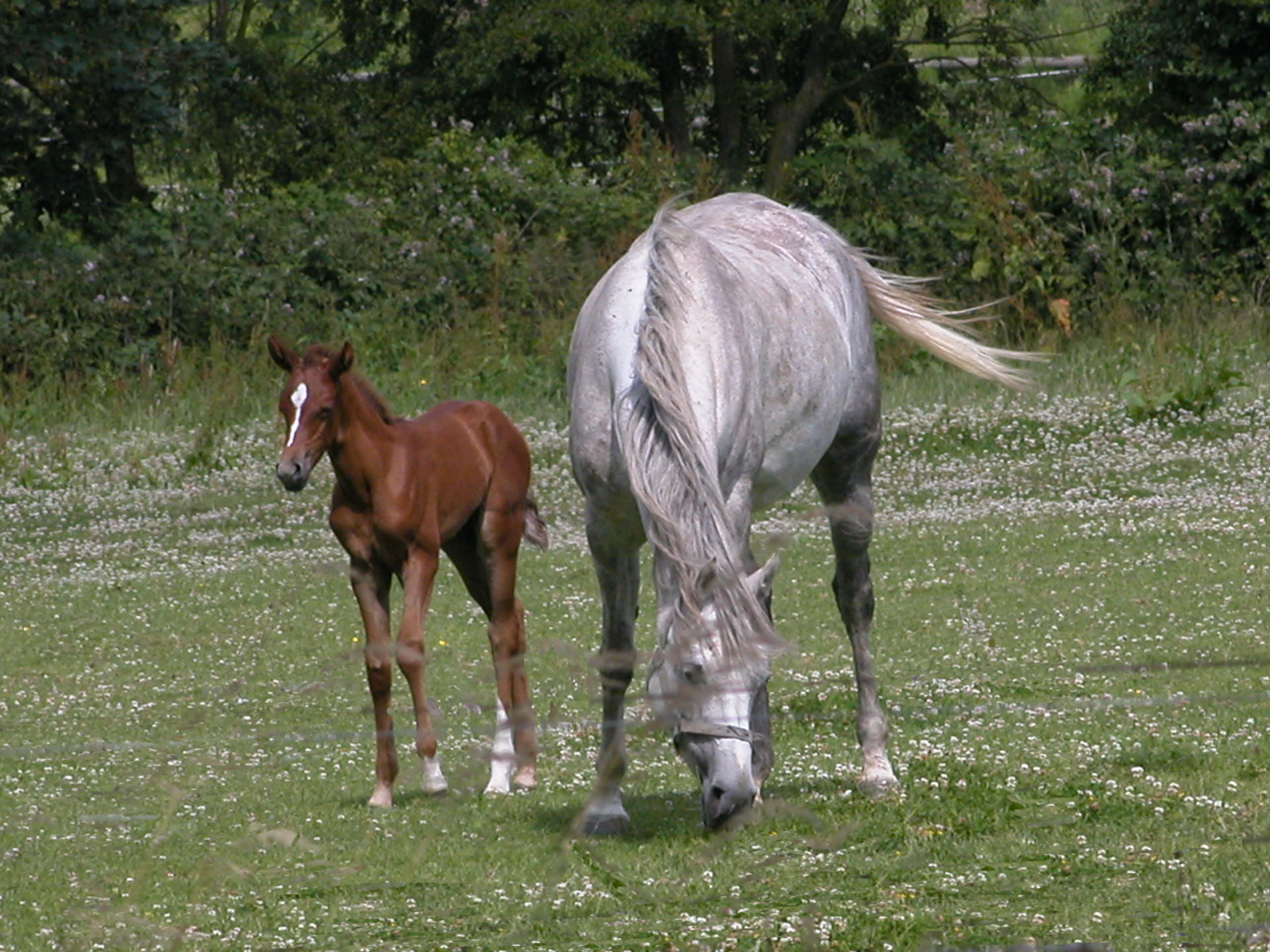 latest horse foal