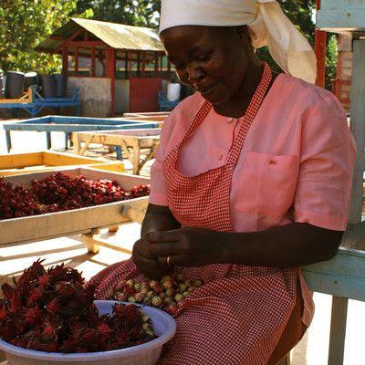 A la découverte d'une coopérative de femmes : MERU HERBS (KENYA)