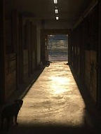 light in barn stall .jpg