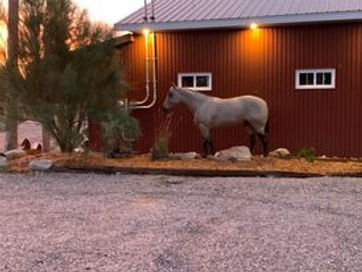 horse in front of barn .jpg