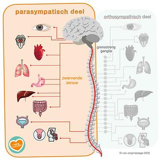 Parasympaticus_afbeelding_©_vzw_zorgmas