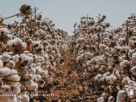 Pecuária de Mato Grosso avança com o aproveitamento dos subprodutos da agricultura
