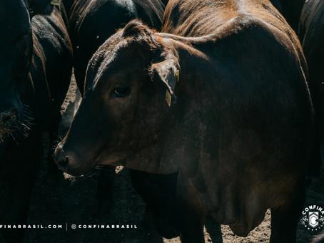 Pecuária e agricultura convivem com alta produtividade e eficiência em Mato Grosso