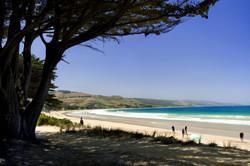 Apollo Bay Beach DSC_1481