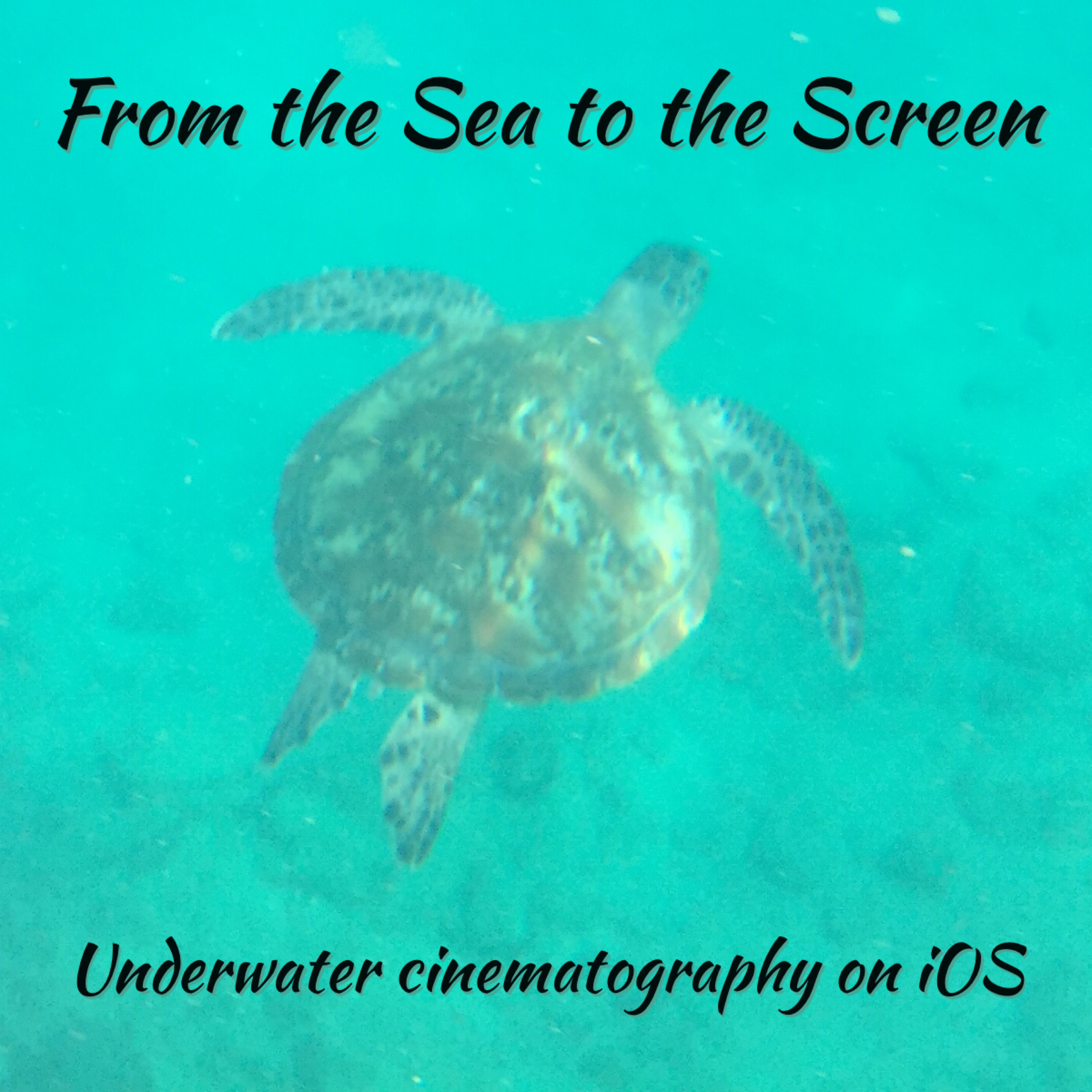 FEATURE: From the Sea to the Screen | Ipad Educators