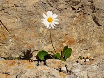 La résilience : plier sans rompre... et trouver la force de rebondir !