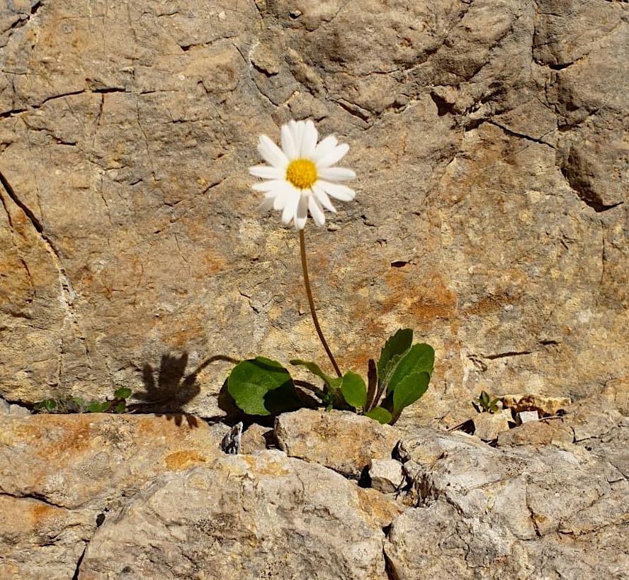 Résilience ; Psychologie Positive ; Carine André ; Grenoble ; Energétique 38