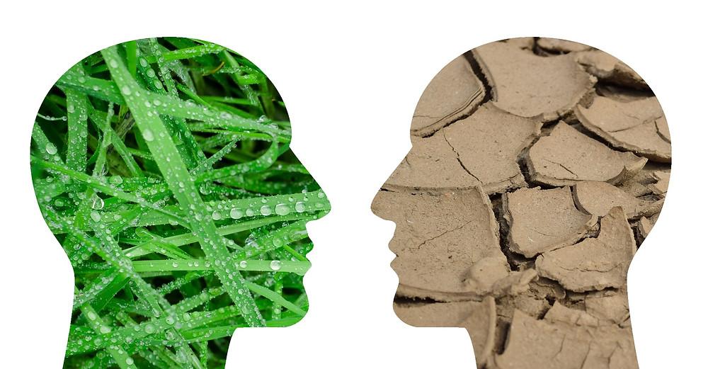 énergie positive ; flexibilité ; neurosciences ; Energétique 38 ; psychologie positive ; Carine André