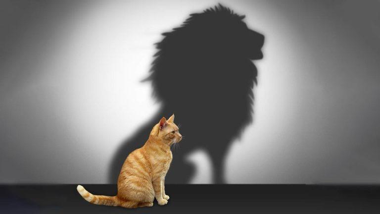 énergie positive ; assertivité ; affirmation de soi ; Energétique 38 ; psychologie positive ; Carine André