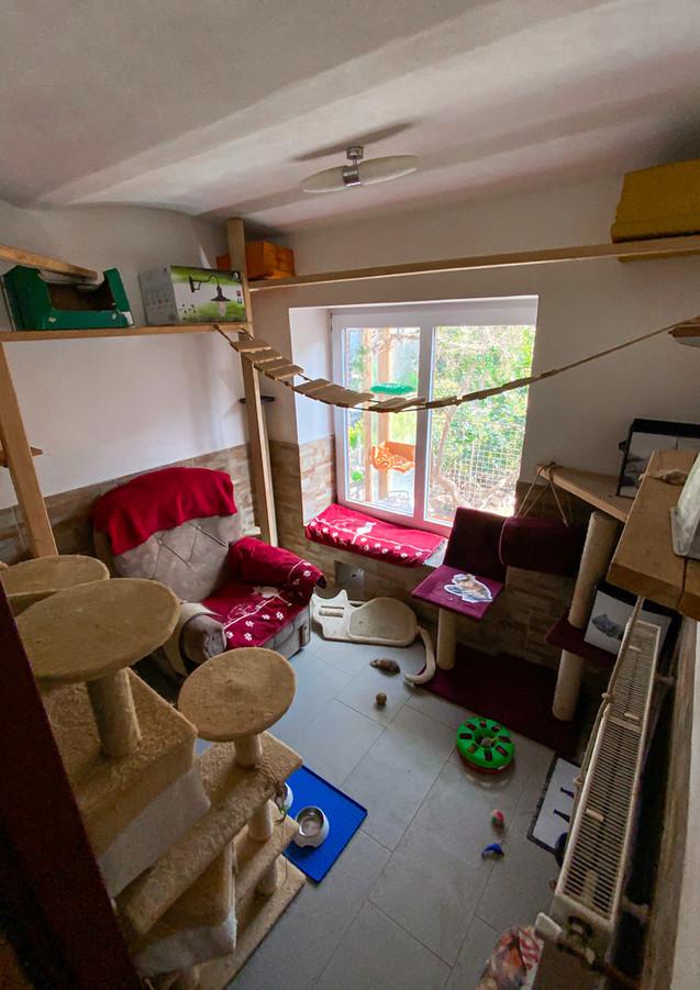 Kočičí místnost s možností vyrazit si do venkovního výběhu