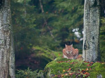 Bavarian forest summer