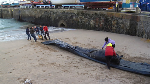 Marine life rescue device