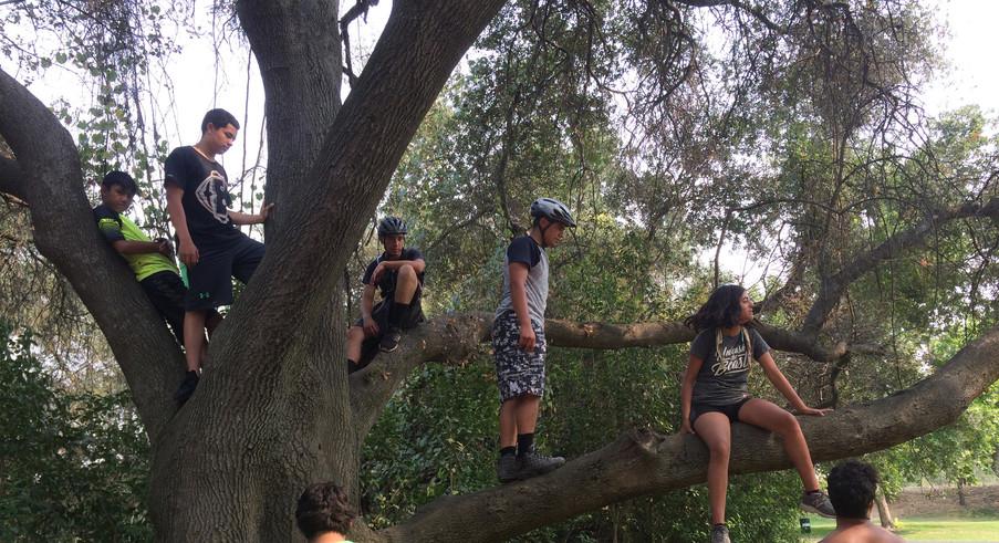 Climbing trees!
