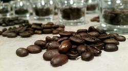coffee bean samples.jpg